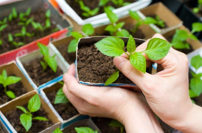 рассада защита растений от сорняков
