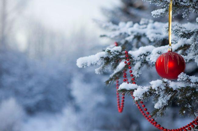 снег елка