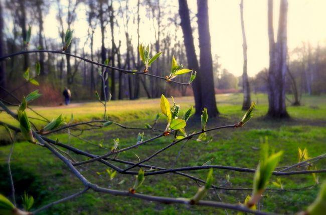 весна тепло зелень