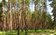 лес заповедник